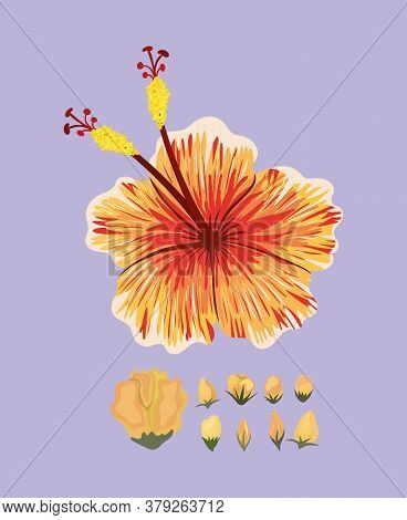 Orange Hawaiian Flower Painting Design, Natural Floral Nature Plant Ornament Garden Decoration And B