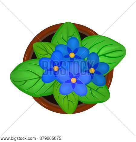 Flower In Pot Isolated On White Background. Fresh Bloom Violet Flower With Green Leaves In Ceramic F