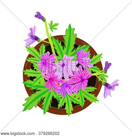 Flower In Pot Isolated On White Background. Fresh Violet Bloom Flower With Green Leaves In Ceramic F
