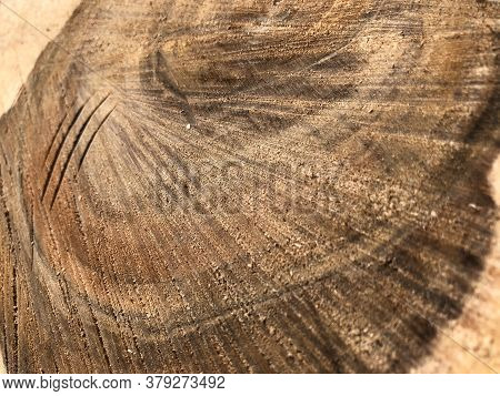Wood Texture Saw Cut Close-up. Cross-section Of A Centenary Walnut Tree. Firewood