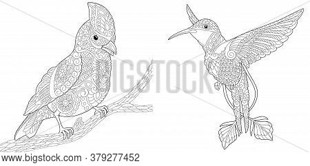 Coloring Pages. Bird Set With Northern Red Cardinal And Hummingbird. Line Art Design For Adult Colou