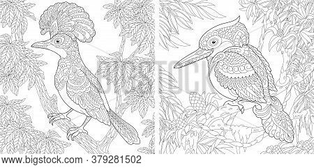 Coloring Pages. Hoopoe Bird And Australian Laughing Kookaburra Or Kingfisher. Line Art Design For Ad