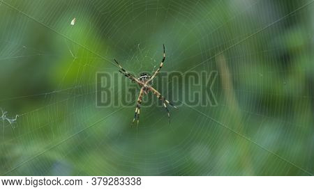 Close-up To A Spider With Black And Yellow Body And Legs In The Center Of Its Spider Web On Green Ba