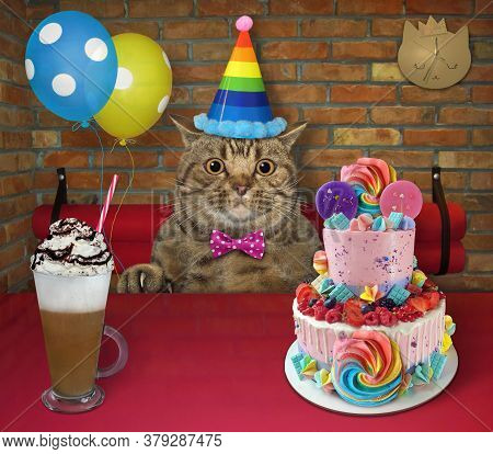 The Beige Big Eyed Cat In A Party Hat With Balloons Is Eating A Holiday Two Tiered Cake And Drinking