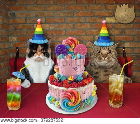 The Couple Of Cat In Party Hats Are Eating A Holiday Two Tiered Cake And Drinking Juice With Ice At