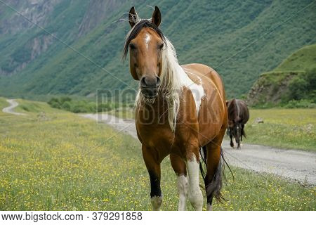 Horses With A Foal Walking In The Mountains On A Meadow