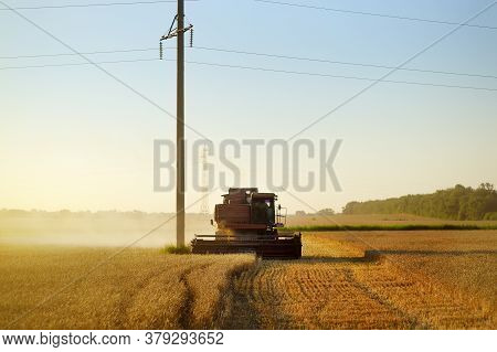 Combine Harvesting Grain On Golden Wheat Field Summer. Harvester Working In Wheatfield At Sunset. Ha
