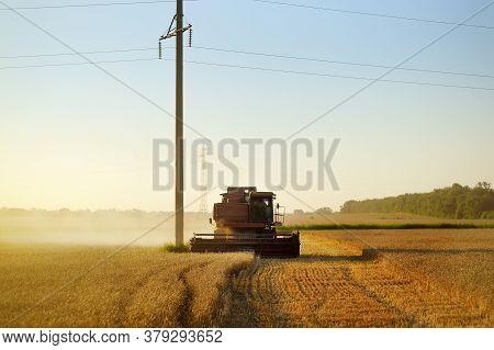 Combine Harvesting Grain On Golden Wheat Field Summer. Harvester Working In Wheatfield At Sunset. Ha