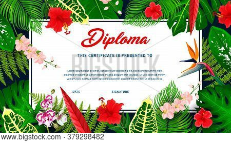 Kids Diploma With Tropical Plants And Flowers. Vector Education Certificate In Frame Of Exotic Hibis