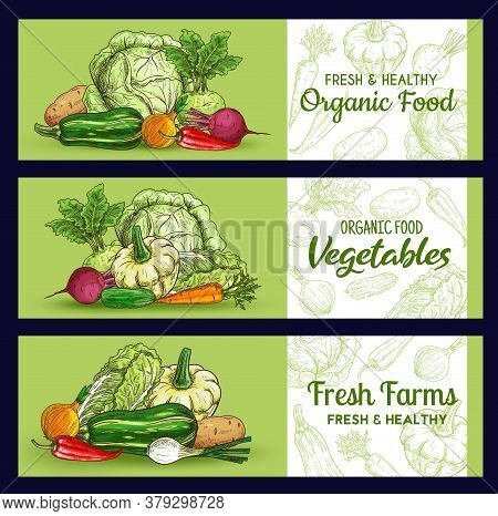 Farm Vegetables Sketch Banners, Vector Veggies Squash And Potato, Beetroot, Onion With Chili Pepper