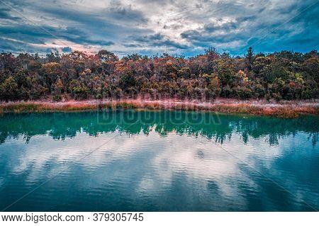 Native Australian Vegetation On Shore Of A Lake