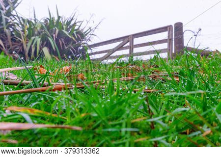 Old Wooden Farm Gate At Top Of Rise On Wet Misty Morning With Dew Drops On Blades Of Grass In Select