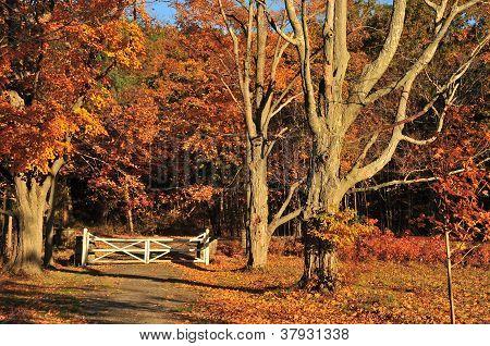 White Autumn Gate
