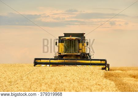 Combine Harvester Working In Wheat Field With Cloudy Moody Sky. Harvesting Machine Driver Cutting Cr