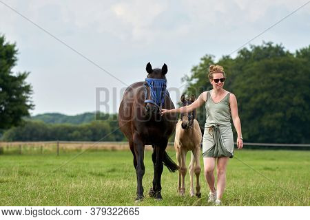 A Falcon Color Foal And A Brown Mare In The Field, With A Fly Mask On, The Woman Is Holding The Mare