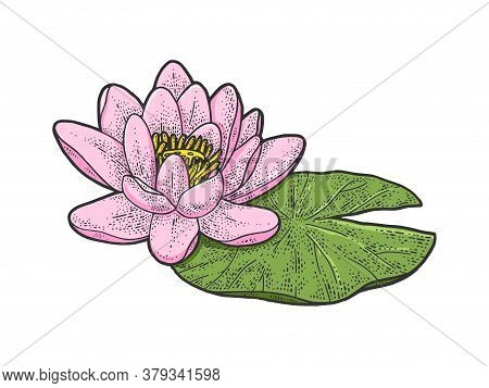 Lotus Nelumbo Water Lily Flower Color Sketch Engraving Vector Illustration. T-shirt Apparel Print De