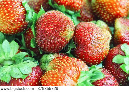 Background From Freshly Harvested Strawberries. Strawberry - The Name Of Plants And Berries Of Green