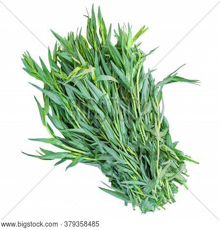 Tarragon Herbs Close Up Isolated On White   Background. Fresh Bunch Of Tarragon Leaves Top View