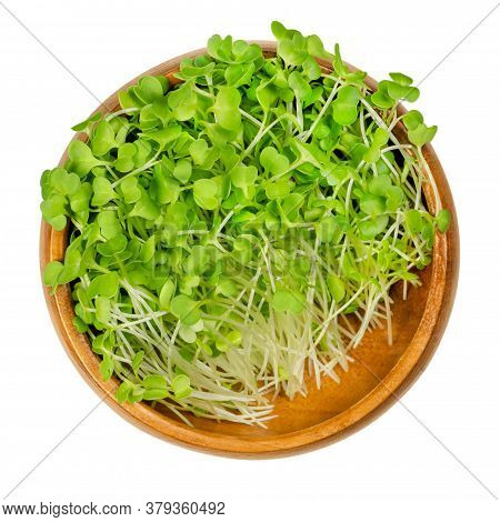 Broccoli Sprouts In A Wooden Bowl. Raw And Fresh Microgreens, Green Seedlings, Young Plants And Coty