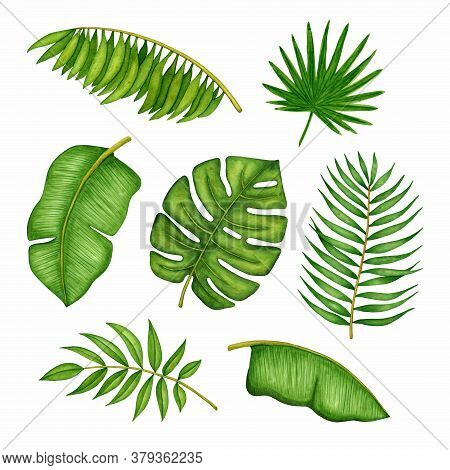 Watercolor Tropical Tree Leaves Set. Collection Of Hand Drawn Monstera, Banana, Coconut Palm Branche