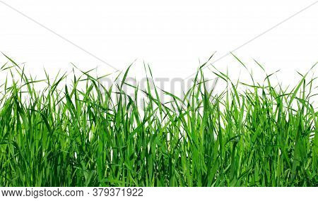 Realistic Green Grass With Dewdrop Isolated On White Background