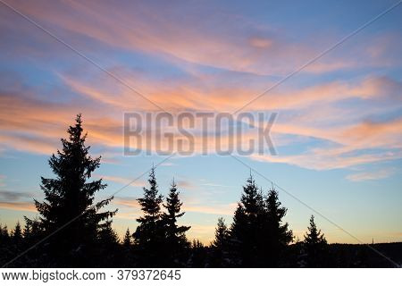 View Of A Beautiful Sunset In The Background Against A Pine Tree Silhouette.