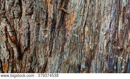 Tree Bark Texture. The Background Is A Rough Surface Of The Trunk, Different Shades Of Brown. On The