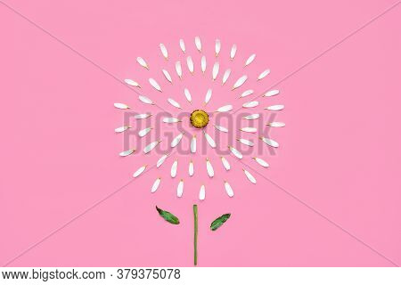 Daisy With Torn Off Petals On Pink Background. Hair Loss Concept