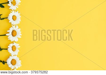 White Colored Daisy Flowers Border On Yellow Background With Copy Space. Summer Background