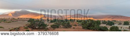 Panoramic View From Sossusvlei Towards Deadvlei. Big Daddy Dune And Trees Are Visible