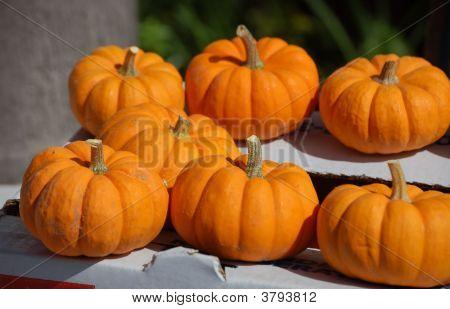 Mini Pumplins