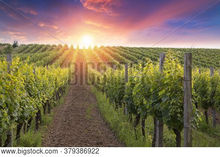 Scenery Vineyard Along The South Styrian Vine Route Named Suedsteirische Weinstrasse In Austria At S