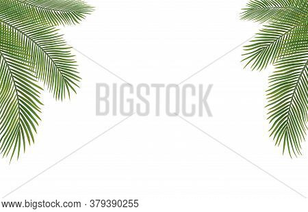 Copyspace Template With Palm Leaves With White Background