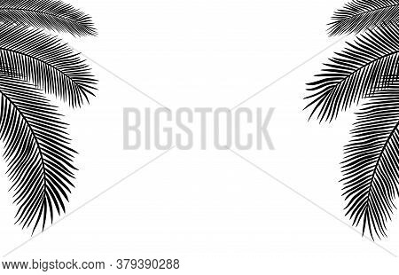 Copyspace Template With Palm Leaves Silhouettes With White Background
