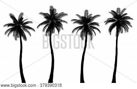 Realistic Palm Tree Silhouettes, Trunk And Leaves Are Isolated From Each Other, Set 1