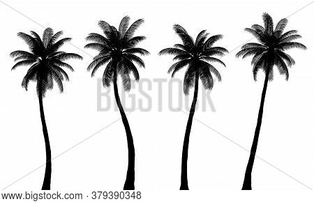 Realistic Palm Tree Silhouettes, Trunk And Leaves Are Isolated From Each Other, Set 2