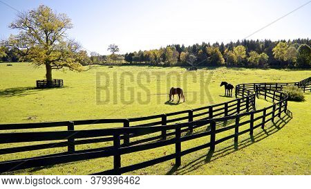Horse Farm With Fences In Fall Color In Ontario, Canada.