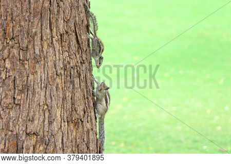 Squirrels,animals,squirrels In Tree,squirrels Looking Each Other,park,wild Life