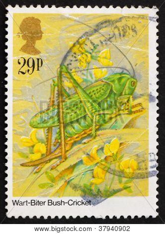 Postage stamp GB 1984 Wart-Biter Bush-Cricket