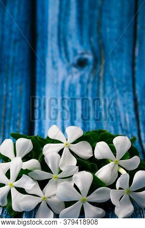 Flowers Composition & Frame Made Of Various White Flowers On Blue Background.