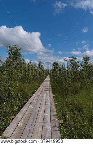Footbridge Across The Swamp At Bolshom Rakovom (big Crayfish) Lake. Eco Route In The