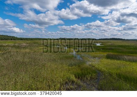 Panorama Of Swamp At Bolshom Rakovom (big Crayfish) Lake. Eco Route In The