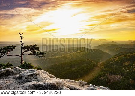The Pine Trees Growing On The Precipice Of The Inspiring, Sacred And Majestic Sandstone Mountain, Fa