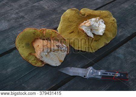Boletus Edulis Mushrooms On Old Wooden Background.autumn Cep Mushrooms.gourmet Food.