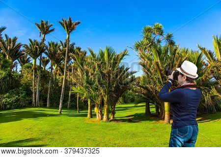 Travel to an exotic country New Zealand. Sunny summer afternoon. Tall, slender palm trees in a palm grove. The concept of ecological, exotic and photo tourism