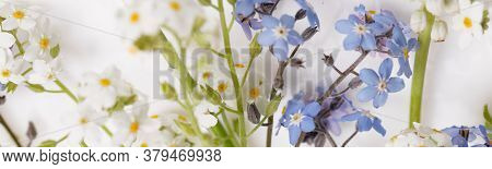 Blue And White Forget-me-nots. Little Spring Summer Flowers On A White Background.