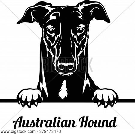 Australian Hound - Peeking Dogs - Breed Face Head Isolated On White