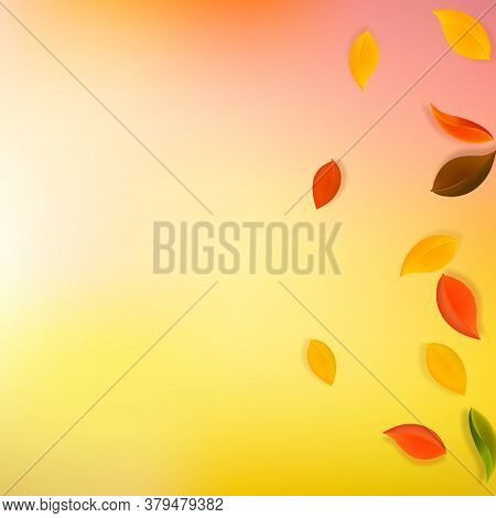Falling Autumn Leaves. Red, Yellow, Green, Brown Neat Leaves Flying. Gradient Colorful Foliage On Ar