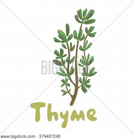 Thyme. A Cute Branch Of Thyme Illustration. Herbs Vector Object Isolated On White Background. Kitche