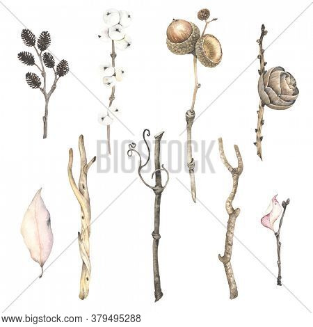 Watercolor set with dry branches tree alder, grapes, winter berry, birch, acorn on oac branch, leaf and pine cone. Autumn and winter isolated illustration in vintage style.